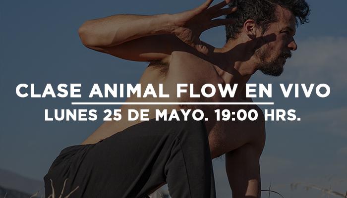 Quinta clase de Animal Flow